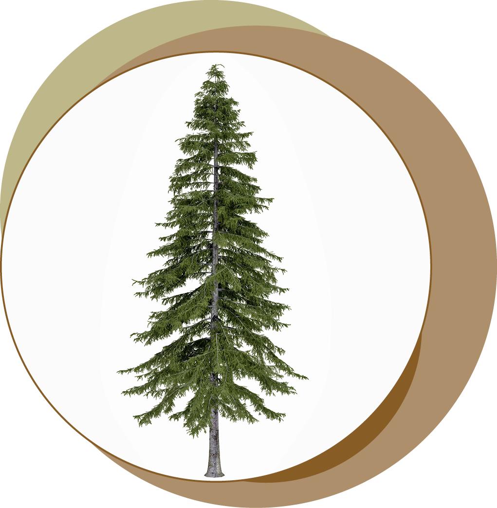 papier und mehr holz nadelbaum